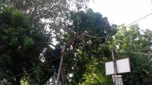 Des pompiers répondent à l'appel d'un corbeau impuissant emmêlé dans une corde de cerf-volant
