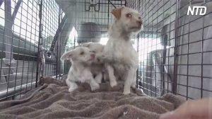 Une équipe sauve une mère et ses petits. Après leur arrivée à l'hôpital, ils font une découverte étonnante