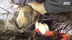 Une chienne sans abri terrifiée se cachait dans les buissons pendant l'orage – regardez de plus près pour savoir pourquoi
