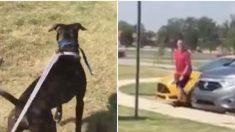 Un chien profite de sa balade, soudain il remarque quelqu'un de familier qui s'avance vers lui - il réagit immédiatement