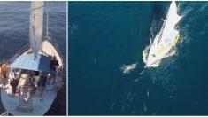 Ce voilier vogue tranquillement sur l'océan – mais soudain, un drone commence à filmer quelque chose d'incroyable