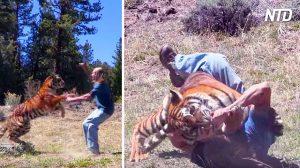 L'entraîneur de la tigresse pense que tout est sous contrôle pendant la cascade, mais quand elle saute, ça devient effrayant
