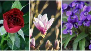 Découvrez quelle fleur correspond à votre personnalité en fonction du mois où vous êtes né