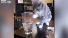Jouer avec un verre d'eau quand on est un chat, c'est très drôle, mais...