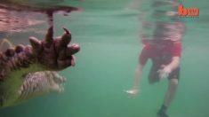 Une famille en vacances à Cuba profite de l'occasion pour nager aux côtés des crocodiles