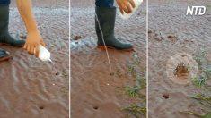 Un homme verse de l'eau salée dans de minuscules trous sur la plage - c'est incroyable ce qui en sort!