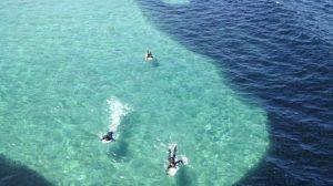 Les surfeurs remarquent une ombre énorme qui s'approche du rivage – mais quand ils découvrent ce dont il s'agit, ils sont stupéfaits