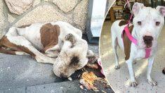 La police trouve une chienne mourante sur le trottoir - au lieu de s'éloigner, ils l'ont secourue avec amour!