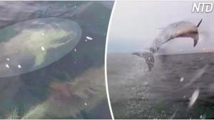 Des plaisanciers attirent l'attention de centaines de résidents de l'océan – puis ça devient un peu incontrôlable!