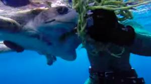 Des plongeurs sur un bateau repèrent une tortue en détresse, le sauvetage héroïque est capturé sur vidéo