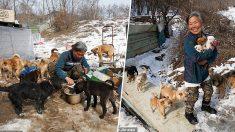 Un ange de bonté consacre sa vie à sauver plus de 200 chiens devant être mangés – une âme vraiment bienveillante