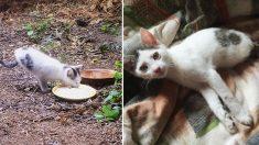 Ce chaton rescapé est né sans pattes arrière, mais il étonne les gens avec ce qu'il peut faire!