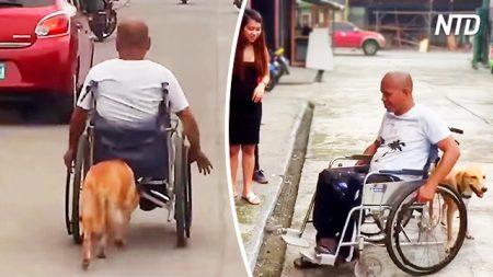 Un homme en fauteuil roulant se fait aider par un chien loyal qui le pousse dans les rues