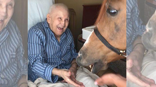 Un cheval dans une maison de retraite: les résidents sont tout sourires après avoir assisté à une thérapie équine