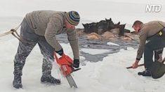 Sauvetage courageux : La population locale mène une course contre la montre pour créer une voie navigable afin de sauver des élans piégés dans un lac glacé