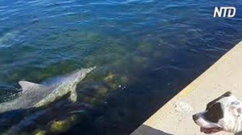 Ce chien se demande vraiment qui sont ces dauphins qui nagent jusqu'à lui – 'Buffy! n'aie pas peur!'