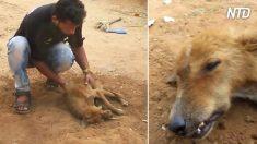Une chienne blessée et affamée avait peu de chance de survivre jusqu'à ce que des gens au grand cœur arrivent
