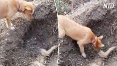 Un chien se tient près de la tombe d'un chien mort, mais regardez ce qu'il fait - c'est déchirant!