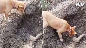 Un chien se tient près de la tombe d'un chien mort, mais regardez ce qu'il fait – c'est déchirant!