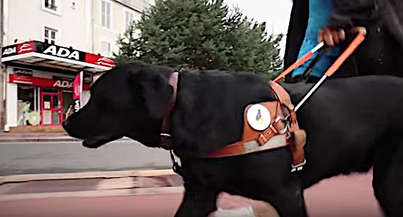Un couple avec un chien guide d'aveugle est refusé dans un restaurant