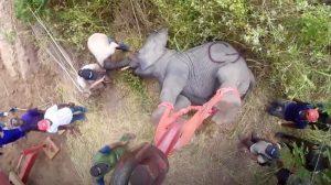 Un homme tire sur des éléphants avec un sédatif et les emporte – vous ne croirez pas ce qu'il fait avec eux