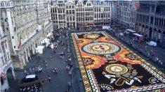 Bruxelles : Les incroyables images des tapis de fleurs