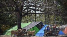 Séismes en Indonésie : les secours s'activent auprès des survivants