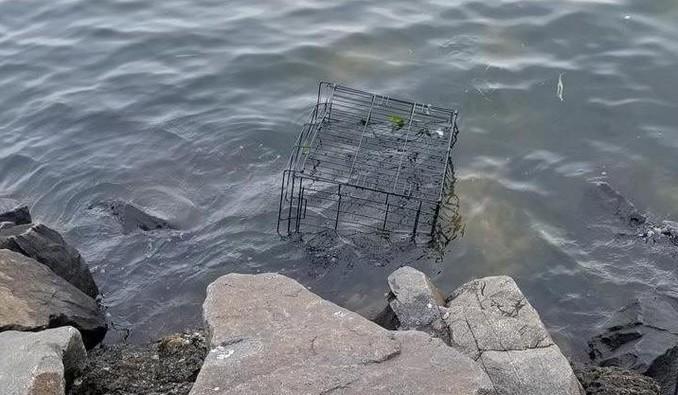 Un jeune pitbull était enfermé dans une cage à marée montante, il a été sauvé par une passante