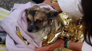 Au Havre, un adolescent sauve une chienne de la noyade – maintenant elle a enfin retrouvé son foyer