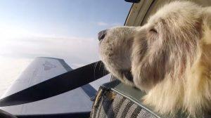 Le vol vers la liberté de Woody, un chien errant malade –  il a échappé de justesse à l'euthanasie