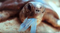 La Nouvelle-Zélande interdit progressivement les sacs plastique à usage unique