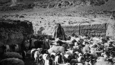 Quand le Tibet se raconte à travers le film « Tharlo, le berger tibétain »