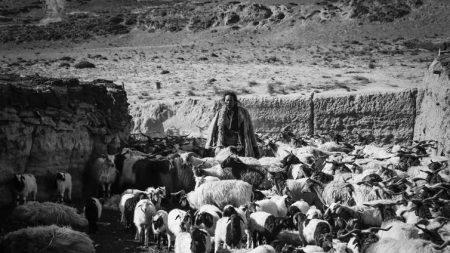 Quand le Tibet se raconte à travers le film «Tharlo, le berger tibétain»