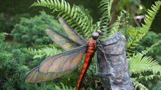 «En direct des espèces»: les libellules géantes du Paléozoïque sont-elles encore parmi nous?