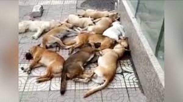 PETA fustige la Chine pour des amas de chiens morts jetés dans la rue