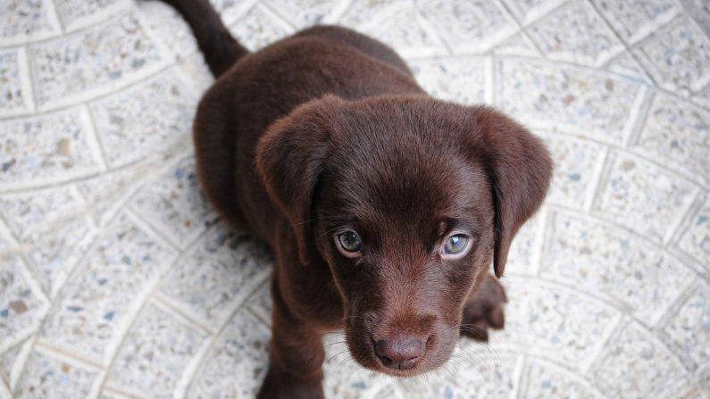Un chien a été retrouvé sans vie dans le bassin de Mulhouse, vraiment insupportable!