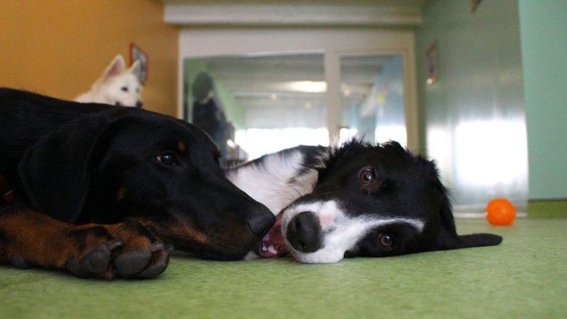 Moselle: Un nouveau concept de crèche pour chiens ouvre ses portes – ici, pas de cage ni de box!
