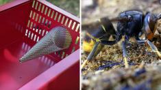 Maine-et-Loire : une invention qui va devenir le cauchemar des frelons asiatiques