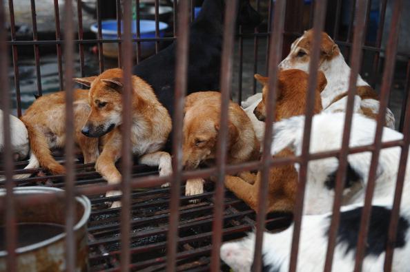 Vietnam: les habitants de Hanoï priés de ne plus manger de la viande de chien