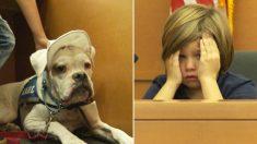 Un chien de thérapie sourd donne le courage à des enfants maltraités de témoigner contre leurs agresseurs au tribunal
