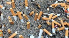 Les mégots de cigarettes polluent davantage les océans que le plastique