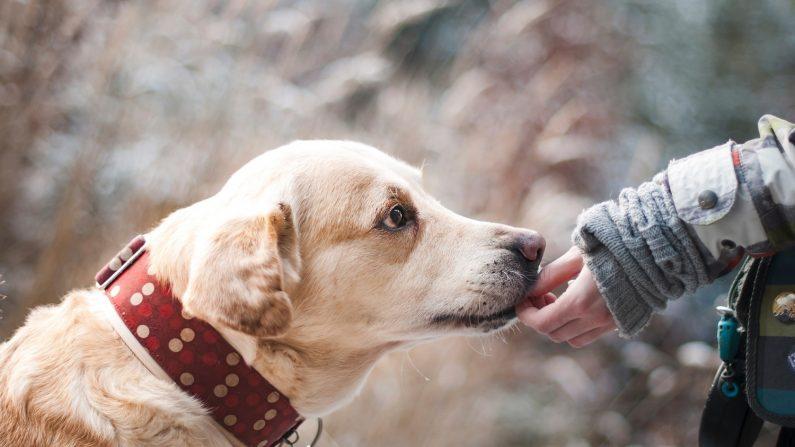 L'abandon des animaux: une proposition de loi pour durcir les peines