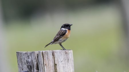 Le déclin inquiétant des oiseaux de nos campagnes: des ravages venant de l'industriel