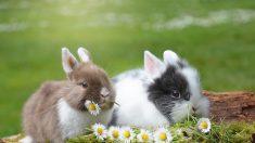 La Californie interdit la vente des cosmétiques testés sur des animaux