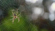 Voici pourquoi héberger des araignées chez soi est très bénéfique