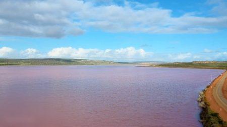 Une photographe capture les images d'un lac rose époustouflant en Australie-Occidentale