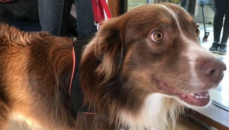 Nouveauté: un animal de compagnie admis à l'hôpital Ambroise Paré de Mons