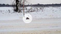 Un conducteur s'arrête immédiatement après avoir aperçu un chaton gelé lors d'une tempête de neige à une température de -18 °C