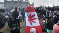 Légalisation du cannabis au Canada : une expérimentation lucrative au détriment de la santé des Canadiens