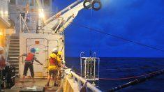 Rares baleines noires : des experts détectent des appels de l'espèce en danger critique d'extinction pour la 1ère fois en 10 ans